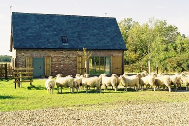 Sheep in Front of Cottage